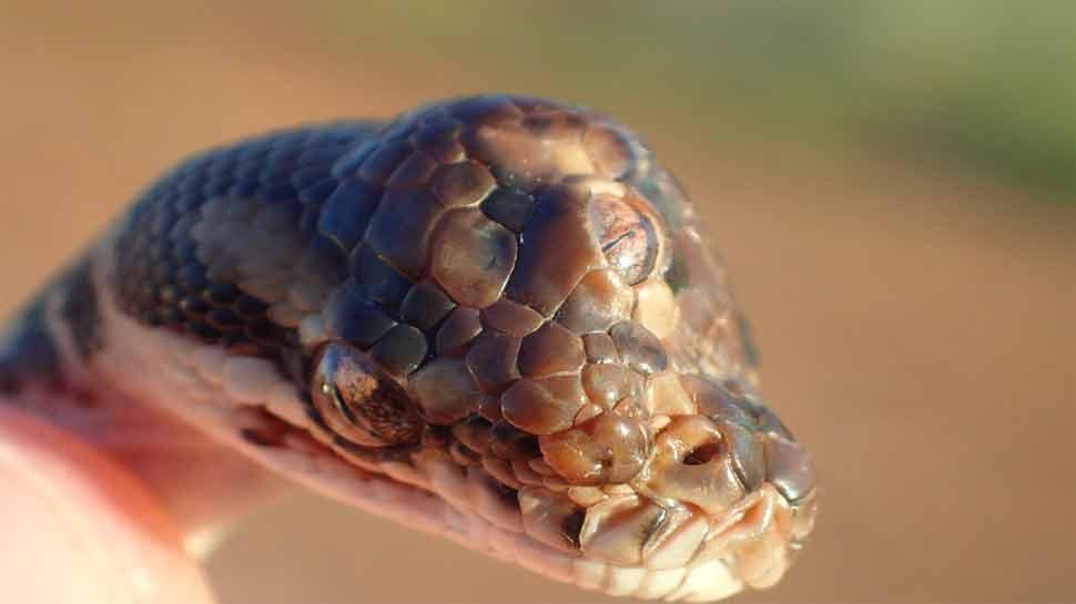 PHOTO: तीन डोळे असणाऱ्या सापाचा फोटो व्हायरल