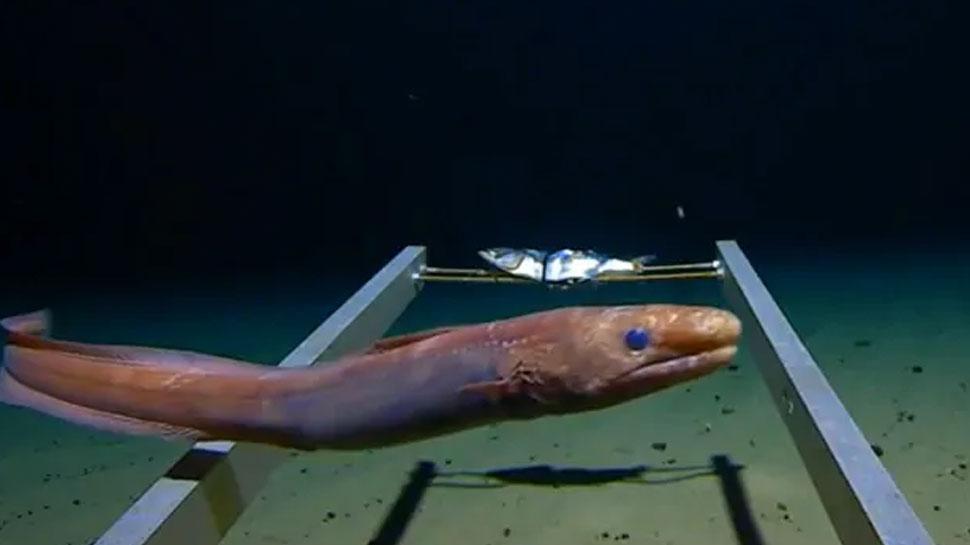 VIDEO: समुद्राच्या पोटात दडलंय तरी काय?