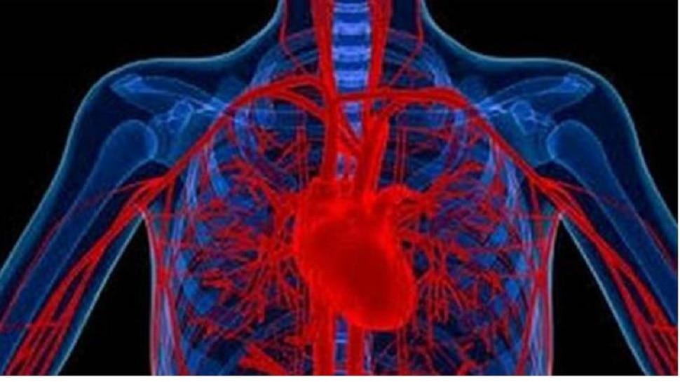 रक्तदाब नियमित राहण्यासाठी या गोष्टी आहारात असाव्यात