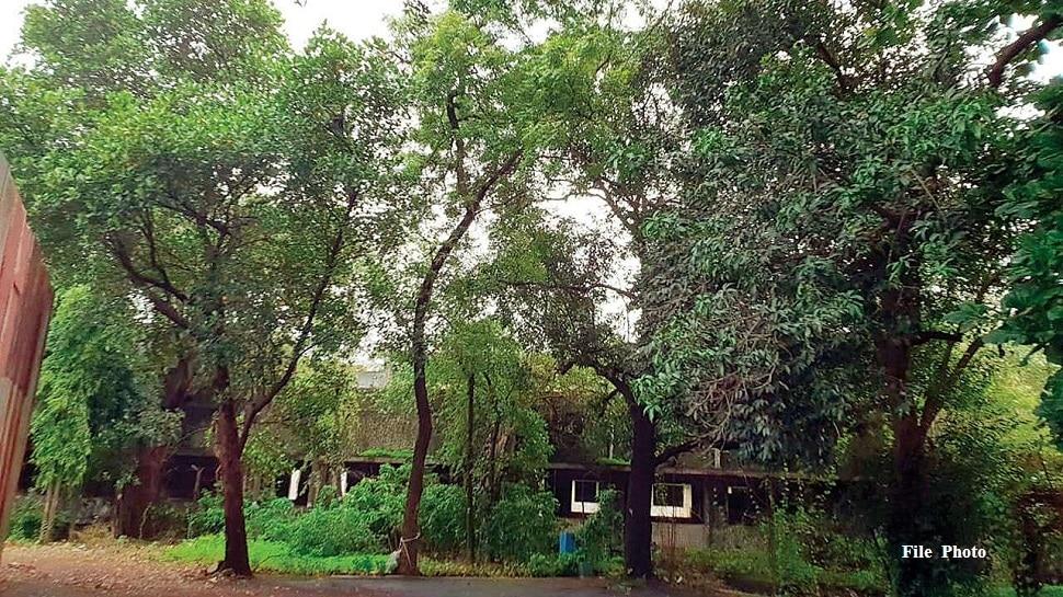 आरेमधील वृक्षतोडीला स्थगिती, मेट्रो कारशेड बांधकामाला नाही