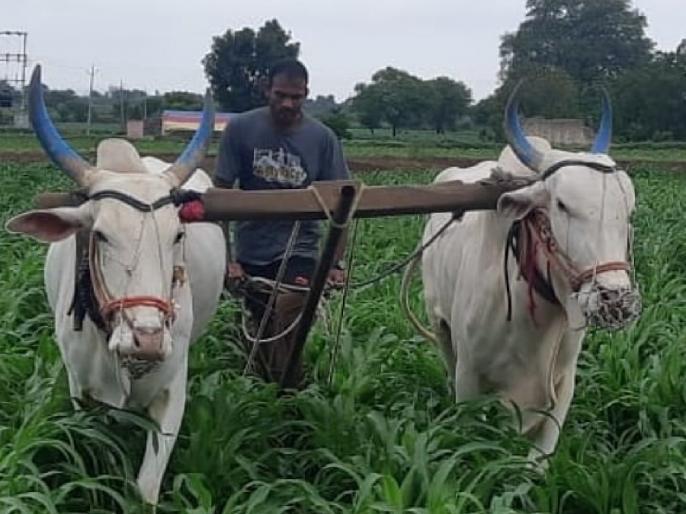 शेतात राबणारा ऑलिम्पिकपटू म्हणतोय, 'होय मी शेतकरी आहे'
