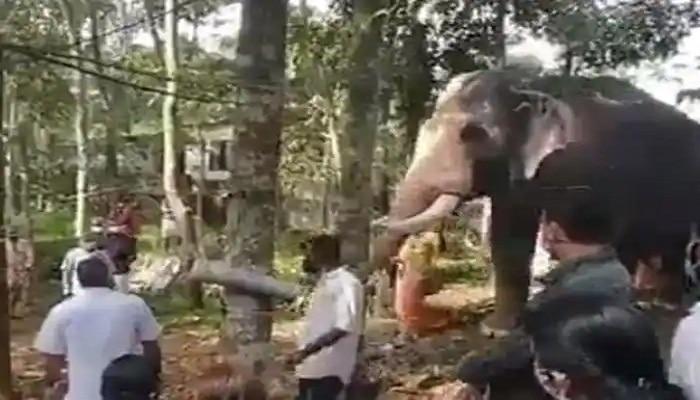 Elephant Emotional Video : माहुताच्या अंत्यदर्शनासाठी पोहोचला हत्ती...अखेरच दर्शन घेताना भावूक
