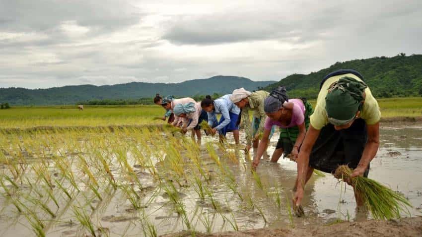 पेरणीची करू नका घाई, कृषी विभागाचा शेतकऱ्यांना सल्ला