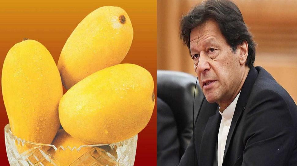 पाकिस्तान चीन आणि अमेरिकेकडून बेअब्रू... परतवलं ते ''मँगो गिफ्ट''...''मँगो डिप्लोमसी''ची लागली वाट