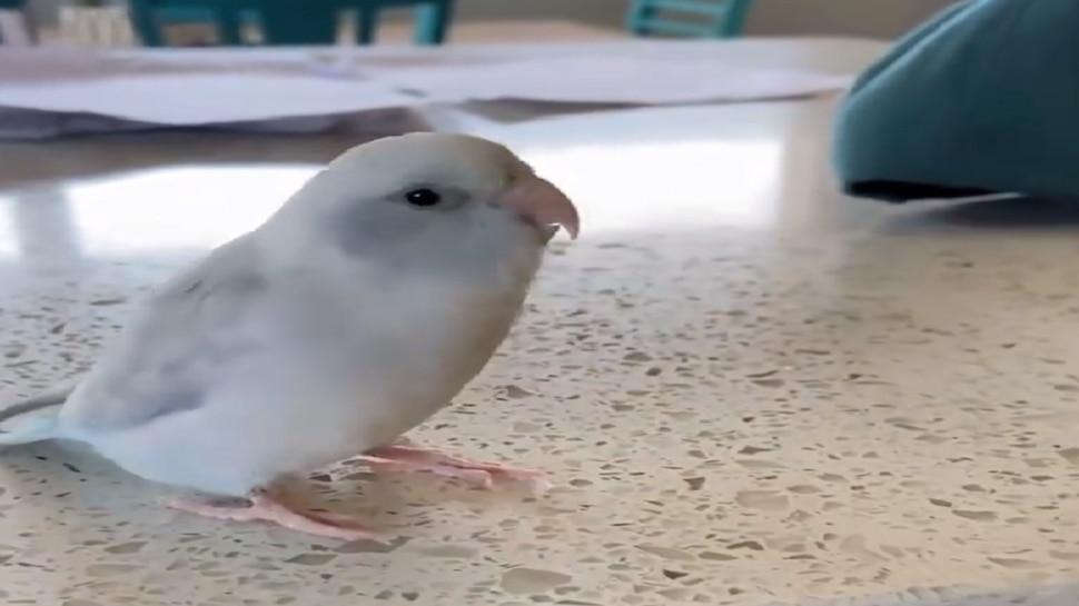 पक्षी म्हणतो I LOVE YOU, हा व्हीडिओ पाहण्याचा मोह तुम्हालाही आवरणार नाही