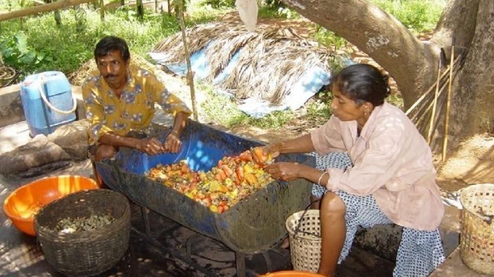 गोव्याची प्रसिद्ध ५०० वर्ष जुनी फेनी दारु का आहे आजही प्रसिद्ध