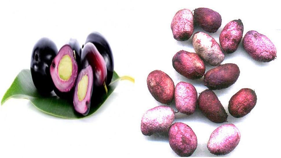 Jambhul Seeds   मधुमेहावर गुणकारी जांभळाच्या बिया, जाणून घ्या अन्य फायदे