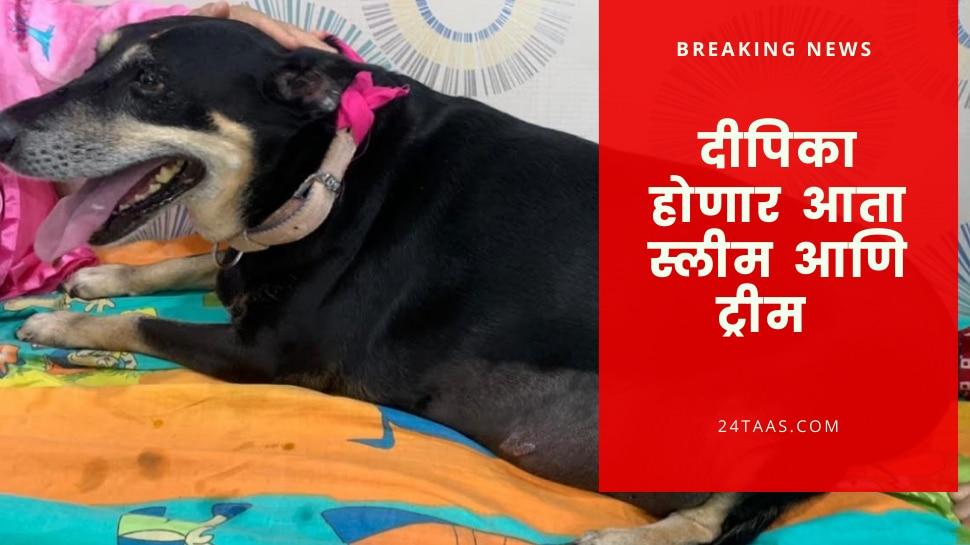 कधी पाहिलीय का, झीरो फिगर कुत्री ! लठ्ठपणा कमी करण्यासाठी चक्क शस्त्रक्रिया