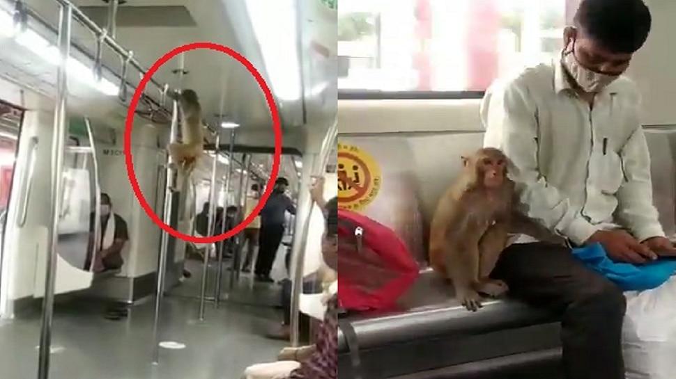 धावत्या मेट्रोमध्ये माकडाची सर्कस... पाहा जबरदस्त व्हिडीओ