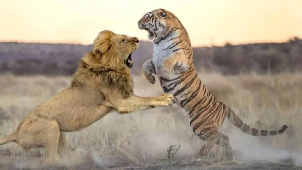 वाघ नाही तर सिंहालाच का म्हणतात जंगलाचा राजा? यामागचं कारण माहित आहे का?