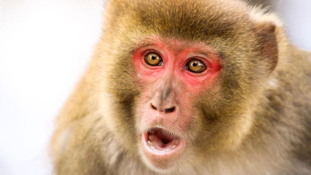 बापरे! 'या' शाळेचा मुख्याध्यापक झालं चक्क एक माकड, पाहा व्हिडीओ