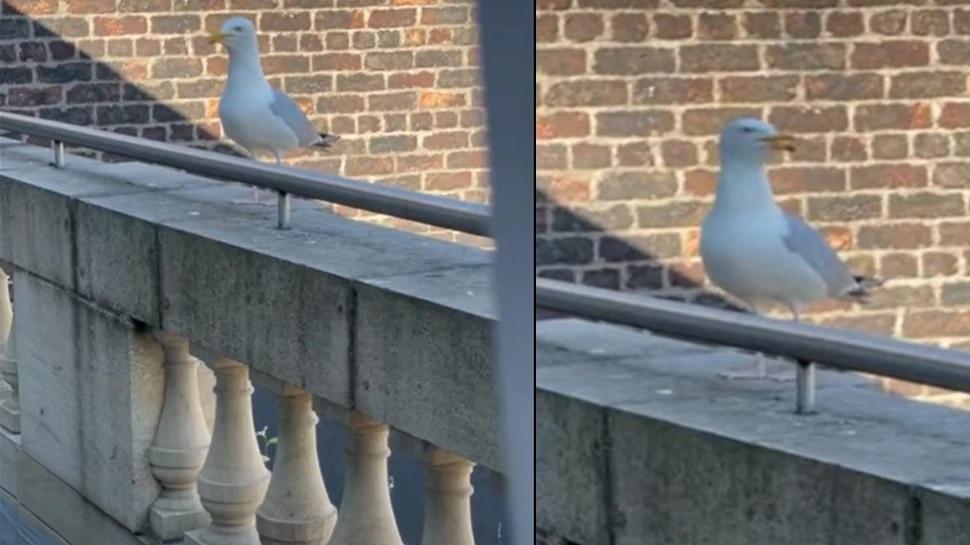 खरंच पक्षी भुंकायला लागला तर? विश्वास बसत नाही मग हा पाहा व्हिडीओ