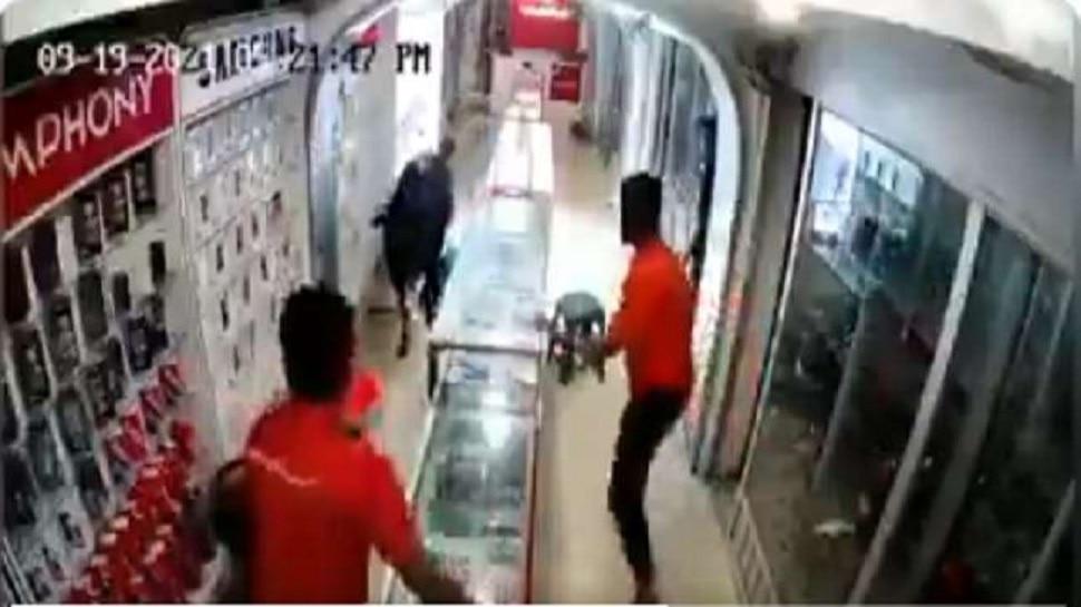 जे कोणत्याही आईला जमलं नाही ते बैलानं करून दाखवलं, फोनच्या दुकानाची भीषण अवस्था दाखवणारा पाहा व्हिडीओ