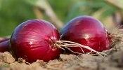 उन्हाळ्यात खिशात कांदा ठेवल्याने उष्माघात रोखता येतो का? वाचा तज्ज्ञांचे मत