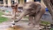 हत्तीला जेव्हा प्रचंड पाण्याची तहान लागली, सोंडेने हँड पम्प उपटून टाकला असेल का? पाहा