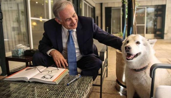 इस्त्रायलच्या पंतप्रधानांच्या कुत्र्याला अटक