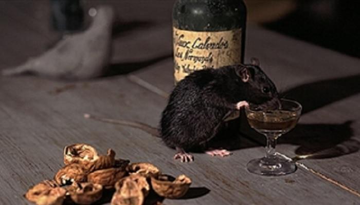 उंदरांनी प्यायली तब्बल ९ लाख लीटर दारु