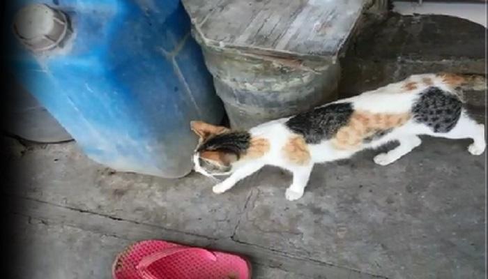 मांजर घरात शिरल्याच्या कारणावरून महिलेची हत्या