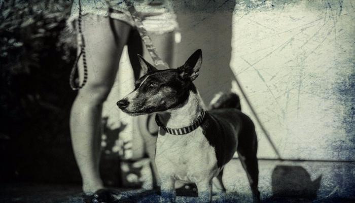 नातेसंबंध : कुत्रीही ठेवतात कुत्र्यांशी रक्ताचे नाते