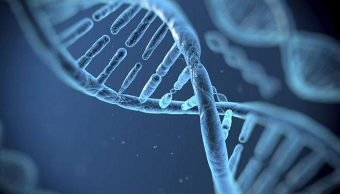 'या' सॉफ्टवेअरने काही मिनिटात होईल डीएनए टेस्ट!