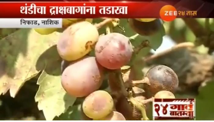 थंडीचा द्राक्षबागांना फटका, तर गव्हाला फायदा