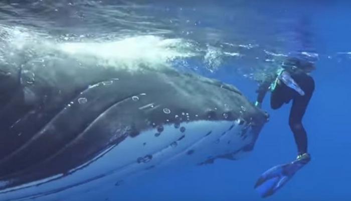 VIDEO: खोल समुद्रात संशोधकांवर शार्कने केला हल्ला आणि मग...