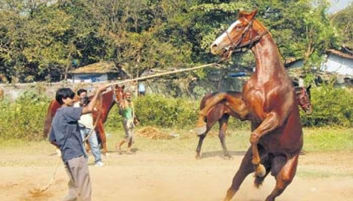 साताऱ्यात घोडे सफारीचा व्यवसाय बंद, पर्यटकांमध्ये नाराजी
