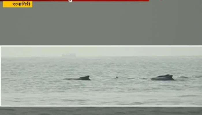 Ratnagiri Tourist Crowd For Dolphin Darshan