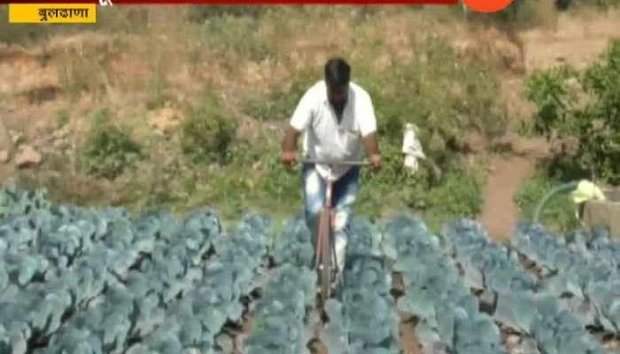 Buldhana Farmer Vishnu Gadakh Cultivate Foreign Vegetable In His Farm
