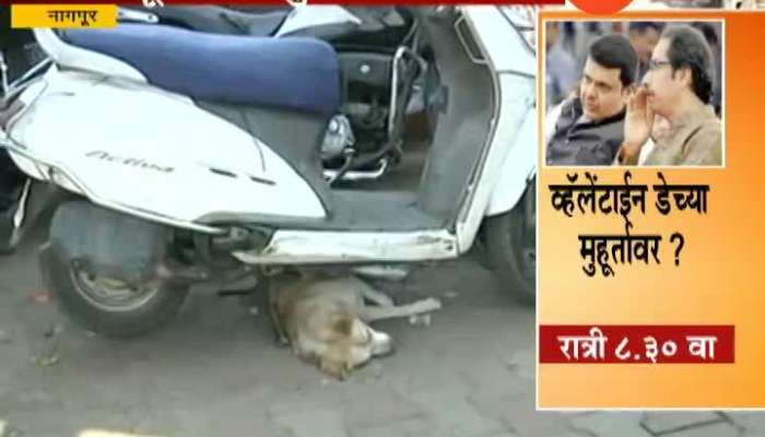 Nagpur Stray Dogs Popullation To Reduce In Few Days