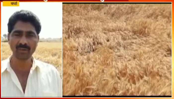 Wardha Unseasonal Heavy Rain And Hailstorm Destroyed Crops