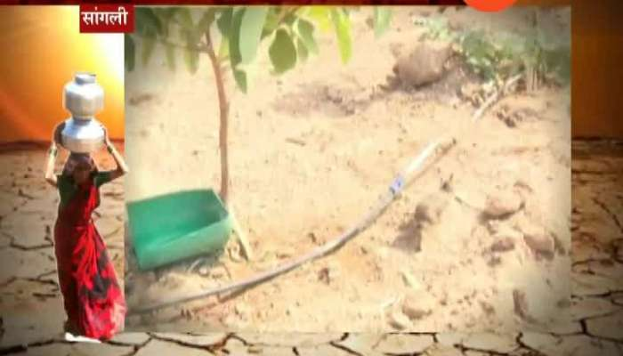 Sangli Bird And Animals Get Affected By Drought Search Water Everywhere