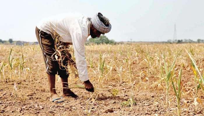 पाऊस लांबल्याने शेतकरी पुन्हा संकटात