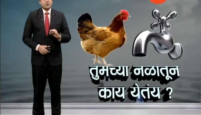 Dombivali hen found in water supply pipe line