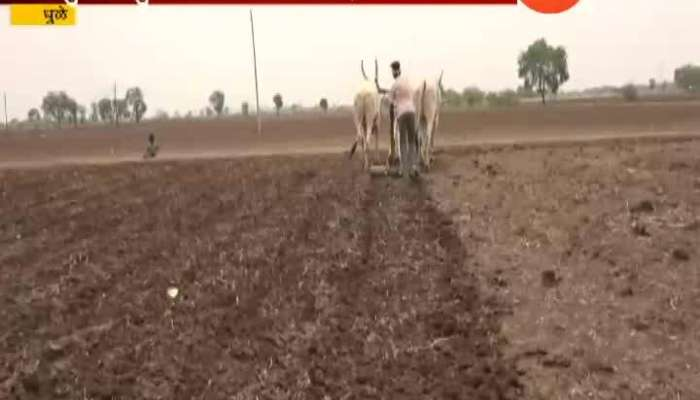 Dhule Nandurbar Farmer Started Sowing As Low And Less Rainfall In The Region