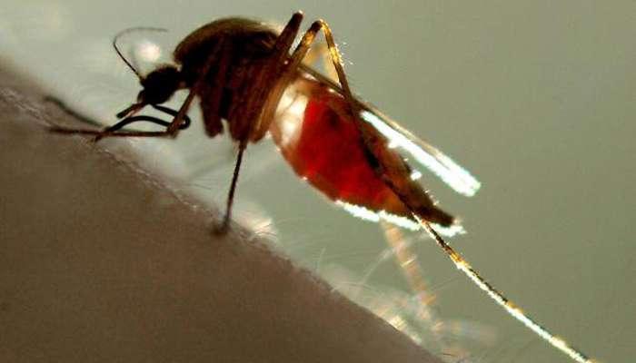 डेंग्यूपासून बचावासाठी करा 'हे' उपाय