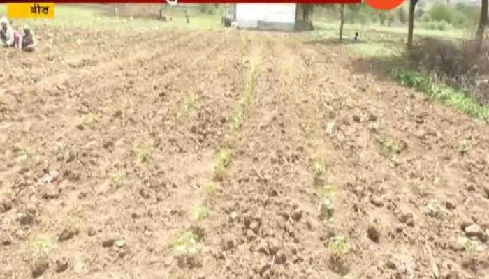 farmer big problem to No rain in beed