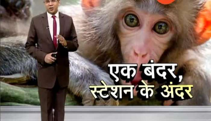 Monkey creates panic on People Vasai in Railway station