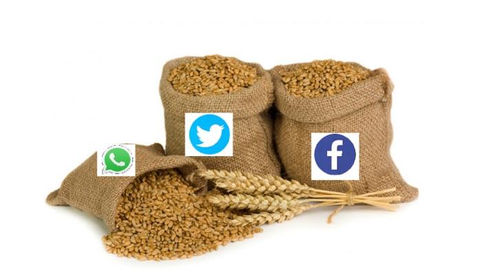 फेसबूक, ट्विटर आणि गुगल ब्रँडचा गहू आता बाजारात