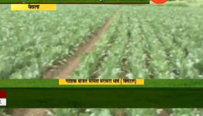 Peekpani Yeola Farmers Got Good Production Of Cauliflower By Morden Farming