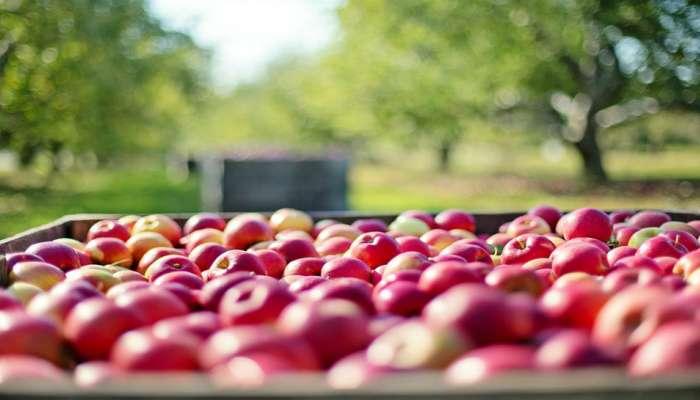 काश्मीरचे सफरचंद थेट पुण्यात उपलब्ध
