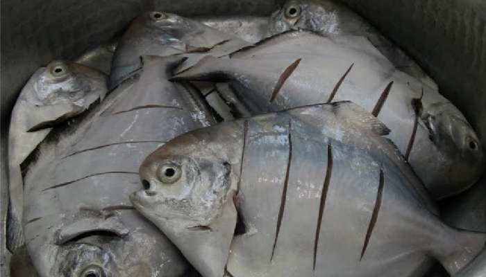 पापलेट मासाविषयी तुम्हाला हे माहित आहे का?