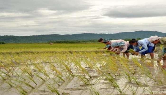 शेतकरी, मच्छीमारांना परतीच्या पावसाचा फटका