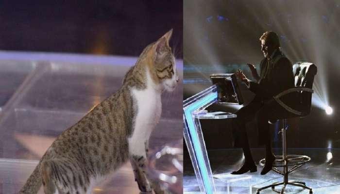 'KBC'च्या मंचावर मांजरीची एन्ट्री होते तेव्हा...