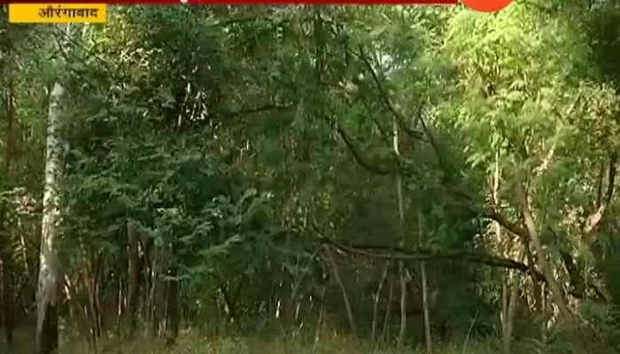 Shivsena not oppose to tree cutting in aurangabad for balasaheb thackeray statue