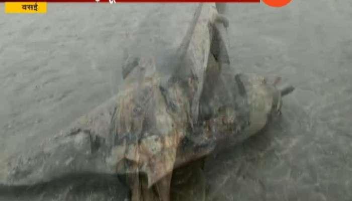 Dolphin Dead found in Vasai sea