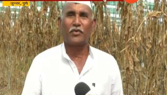 Pune, Junner Farmers Cheated From Rizwan Seeds Company