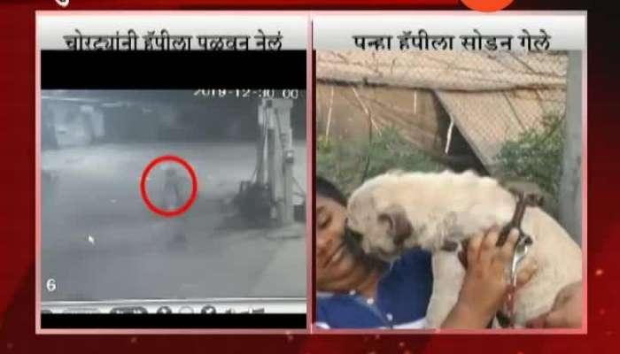 Vasai Pug Dog Return At Home