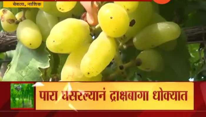 Nashik Yeola Garpes Producing Farmer In Tension From Dropping Temperature