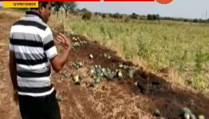 USMANABAD FARMER CROP LOSS DUE TO CORONA